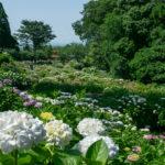 【福岡】久留米市の紫陽花おすすめスポット!千光寺~別名あじさい寺~が美しい。千光寺には御朱印も!