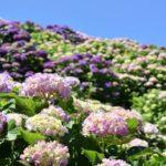 【宮崎】海と紫陽花が美しい『桃源郷岬』へ絶対行くべき!